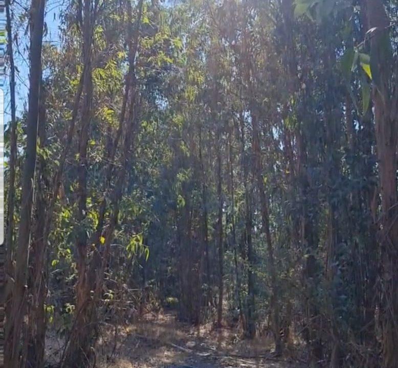 Terreno en Venta en Quilpué de 5.000 mt2, V Región.